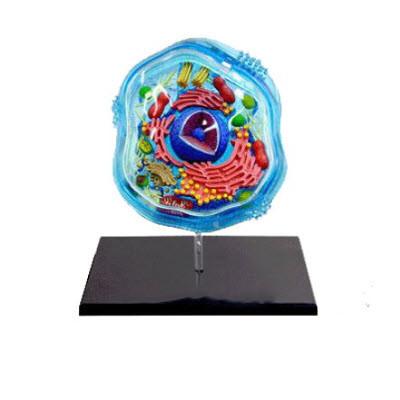 动物细胞模型 YJ/ZZ2002